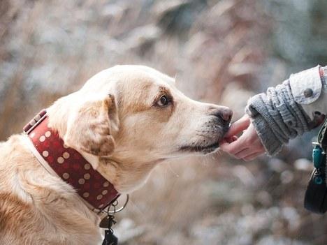 Se abre el plazo para presentar alegaciones a la ordenanza municipal reguladora de la tenencia y protección de animales